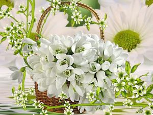flowers -white